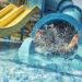 Make A Splash At Lions Water Adventure